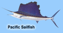 pacific_sailfish.jpg